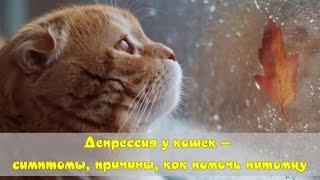 Депрессия у кошек симптомы причины как помочь питомцу Depression in cats