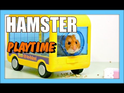 Sad Hamster Bus Doovi