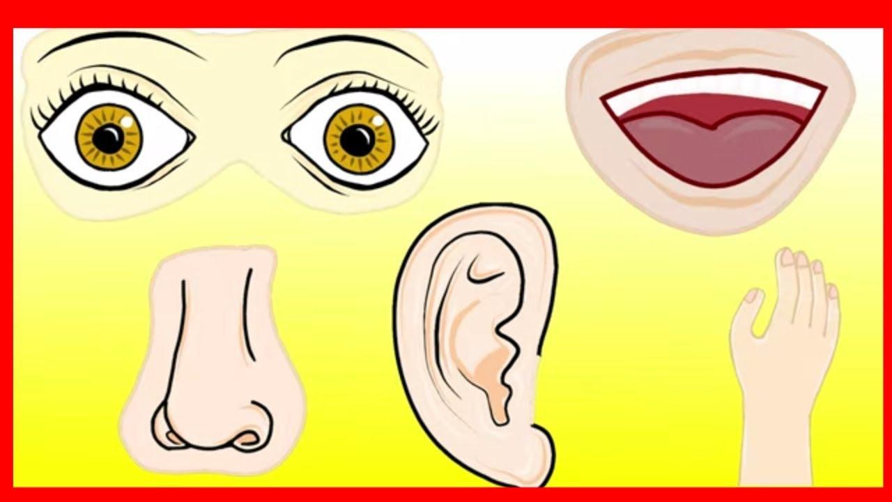 Los 5 Sentidos Gusto Olfato Tacto Oído Y Vista Video Para Niños Pequesaprendenjugando Youtube