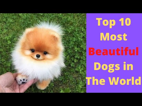 top-10-most-beautiful-dogs-in-the-world