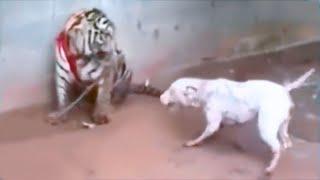 15 Most Dangerous Animals Kept As Pets