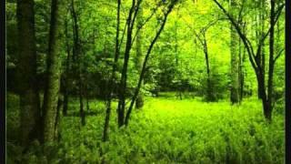 An Endless Sporadic - Eternal Bloom