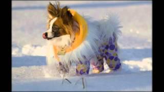 Вязанная одежда для собак.Бесплатная доставка.