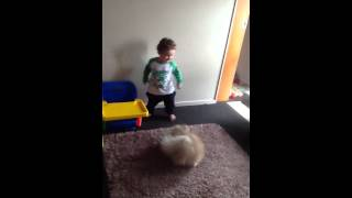 Excited dog wants to play with baby