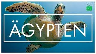 ÄGYPTEN ROAD TRIP | Unterwasserwelt | GarnelenTv