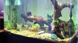new aquarium layout