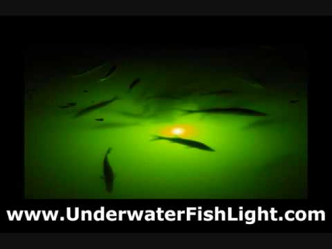 Attract Fish Guaranteed! Amazing Green Fishing Lights