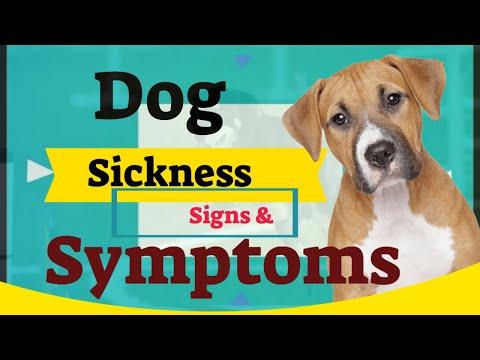 dog-sickness-symptoms-&-diagnosis