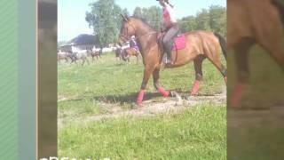 Рабочая тренеровка на новой лошади!