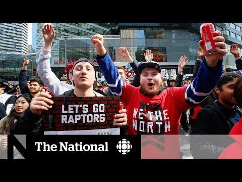 CBC News: The National: Exploring Jurassic Park, Raptors' raucous outdoor viewing party