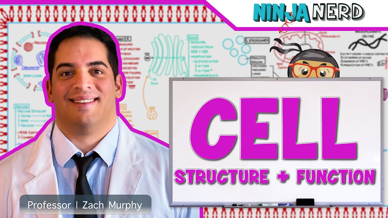 Download Cell Biology | Cell Structure & Function