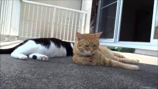 女子会 (保護猫動画) リゾート気分で初夏の薫り
