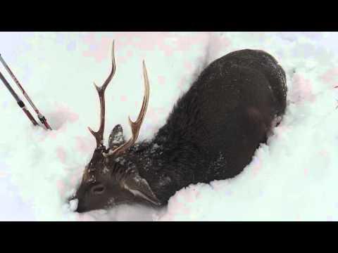 Deer hunting knives #153 / A2 Fox River & Elmax Gunny