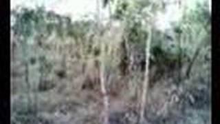 A stroll in Darwin