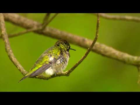 Anxiety Relief Music - Soft Music, Nature Sounds, Stress Relief Music