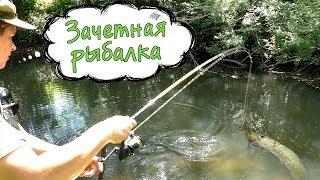 Зачетная рыбалка летом ► что лучше, щука на блесну или живца?