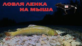 Ловля ленка на мыша в Якутии