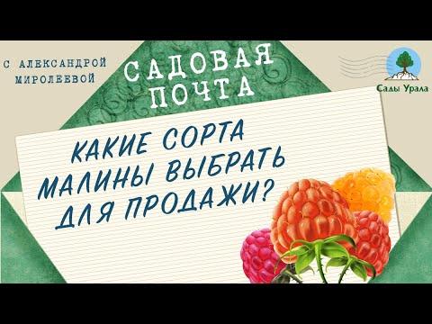 САДОВАЯ ПОЧТА с  Миролеевой Александрой: Какие сорта малины выбрать для продажи? Выпуск 10