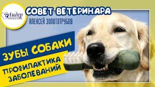 Зубы собаки: профилактика заболеваний. Совет ветеринара (Алексей Золототрубов)