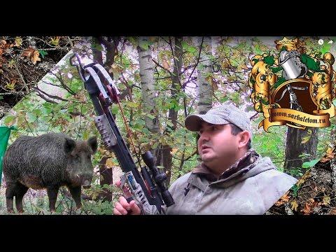 Луки и арбалеты Киев, Харьков, Львов, Запорожье - интернет