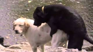 Download Video X Dogs MP3 3GP MP4
