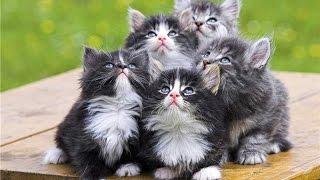 Весёлые котята