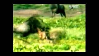 Амазонки в мире животных