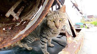 工事現場の器材の隙間で休憩する現場猫達