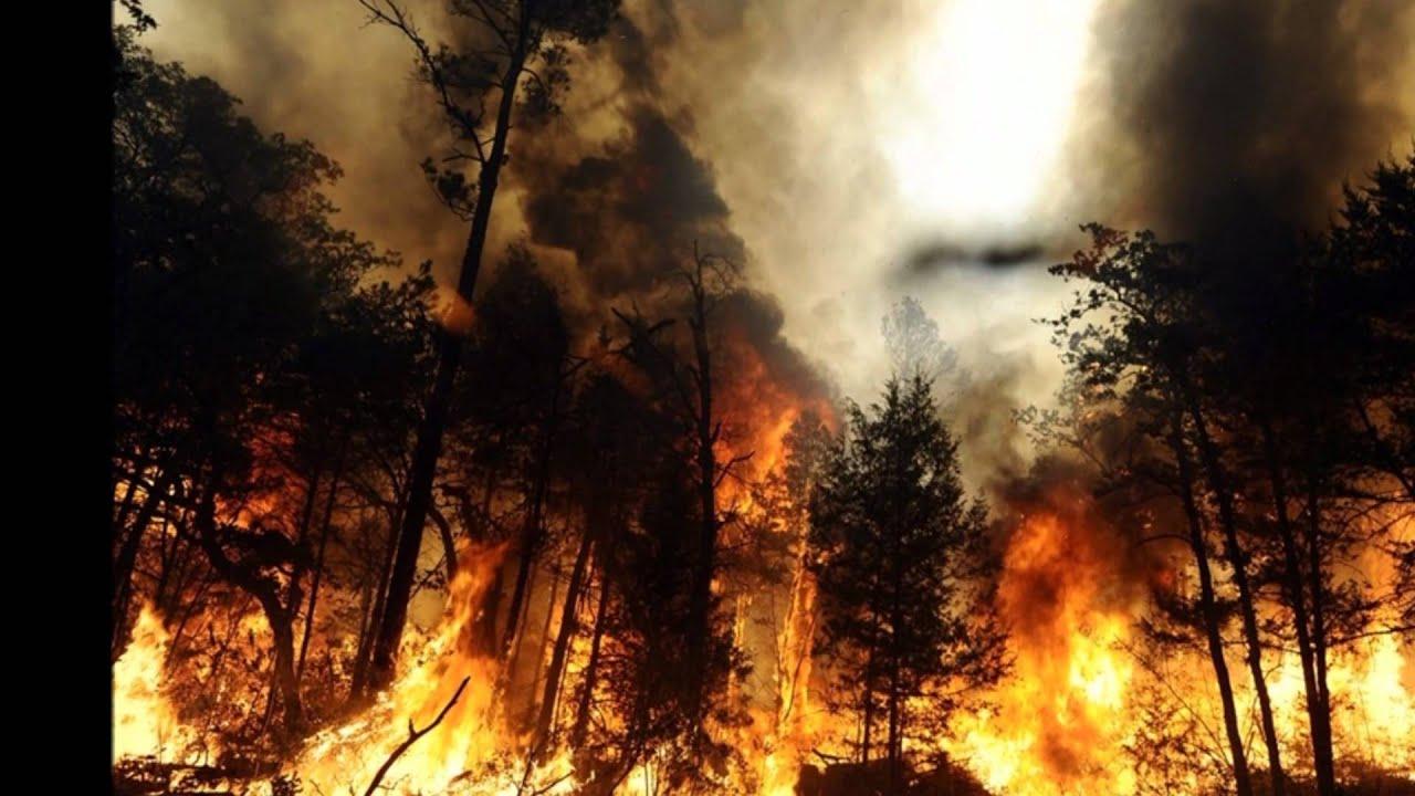 лесные пожары. фото