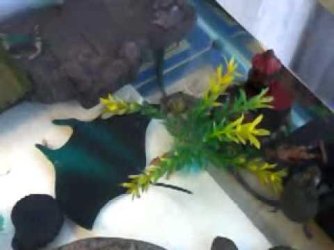 Muestra de acuario para tortugas youtube for Acuario tortugas