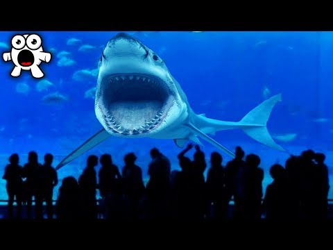 Top 20 Animals You'll Strangely, Never See In Captivity