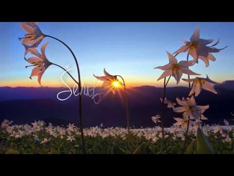 Serif Konjevic - Ja bez tebe nisam ja (2016 - OFFICIAL MUSIC )