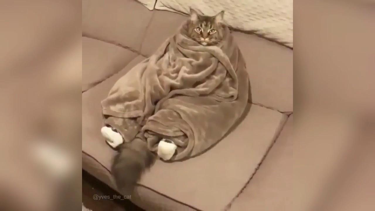 Unduh 61+  Gambar Lucu Kucing Kedinginan Lucu HD