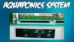 Aquaponics Pdf