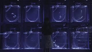 【やなぎなぎ】「未明の君と薄明の魔法」スポット(30 秒)