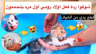 Cats bath for the first time