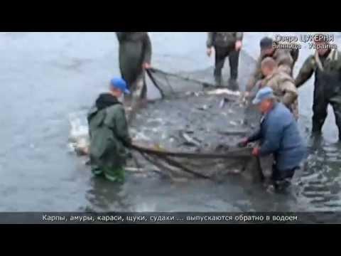 лов толстолоба в ростовской области