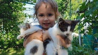 Смешные котята ☀️ Домик для котят Котята и дети Котята мяукают  Нашествие бабочек Киев