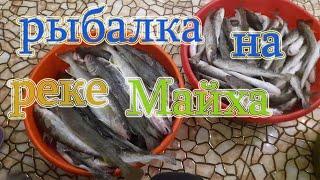 Рыбалка на реке Майха ловля наваги в Приморье