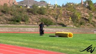 2014 Canadian Police K9 Championship  -  Uno, Bondo And Diesel   -   Youtube