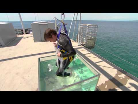 Richard Hammond's Miracles of Nature - Hagfish Slime