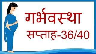 Pregnancy | Week by Week | Hindi | Week 36