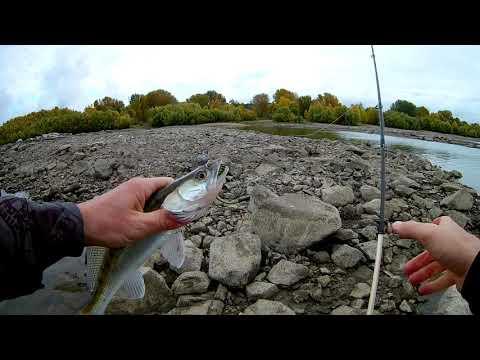 Рыбалка в Новосибирске  День 1  Ловля щуки, судака, окуня
