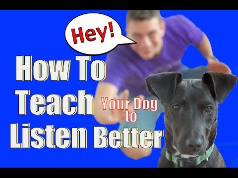 How to Train your Dog to Listen to You OFF LEASH and with Distance