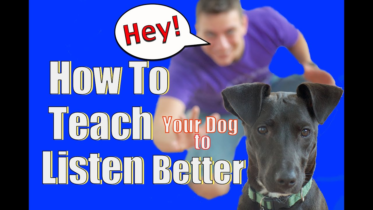 How To Train Dog To Listen Off Leash