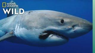 Shark Awareness Day: It's Totally Jawsome | Nat Geo Wild
