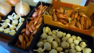 connectYoutube - Allotment Diary : How I store Onions, Garlic & Shallots for longer