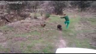 обезьяны скачут на кабане скачать