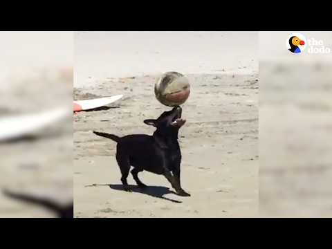Smart Dog Balances Ball On His Head