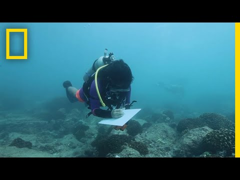 saving-ocean-biodiversity:-coral-restoration-|-explorers-in-the-field
